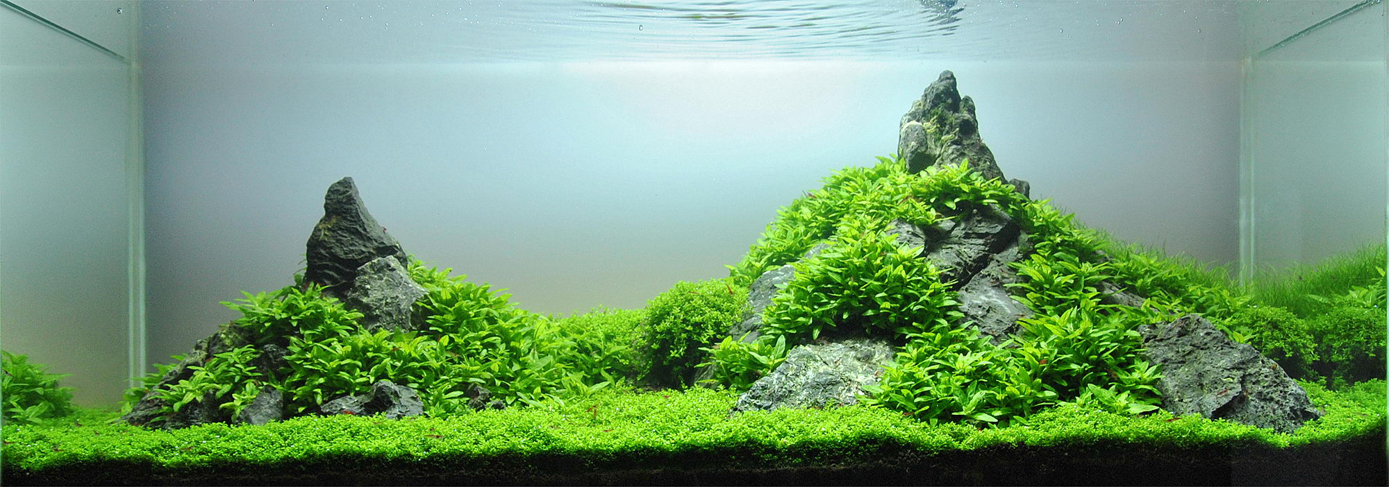 best substrate for planted tank