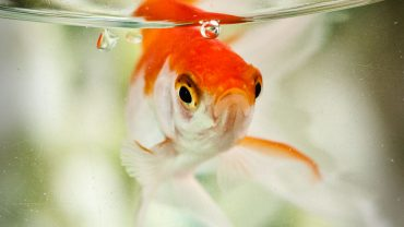 What Is The Best Cichlid Food 4 Great Choices For Optimal