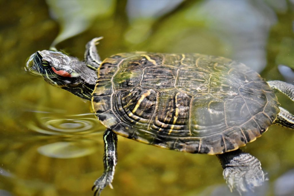 What Can Turtles Eat From Human Food