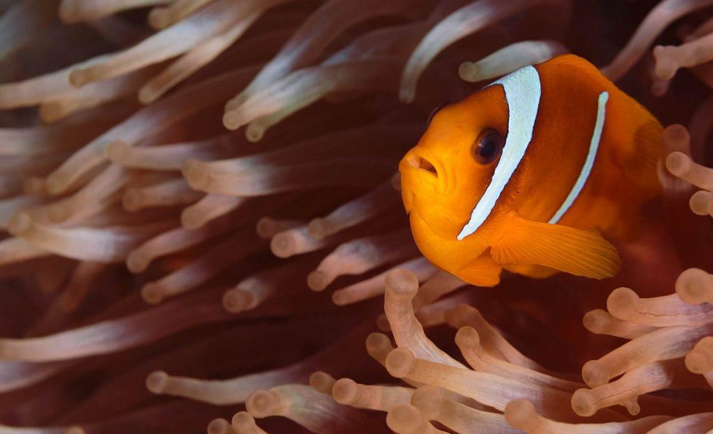 clownfish tank size