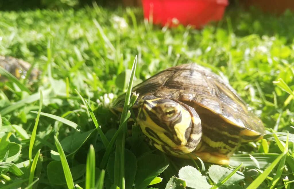 How To Make Tap Water Safe For Turtles