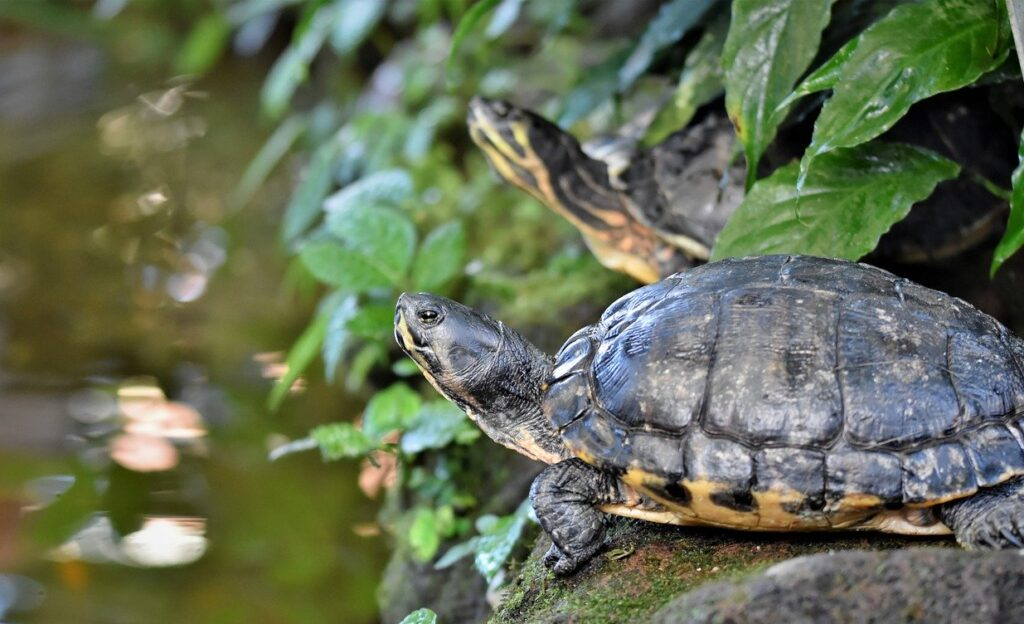 Do Turtles Need a Heat Lamp at Night